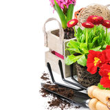 Fresh flowers with garden tools Royalty Free Stock Image