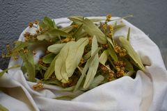 Fresh flowers and leaves of linden.Dried linden flowers stock photography