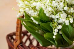 Fresh flowers. Lily of the valley close up in a basket. The Fresh flowers. Lily of the valley close up in a basket Stock Photography