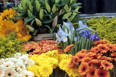 Fresh flowers at a market Stock Image
