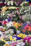 Fresh flowers at an outdoor farmers market Royalty Free Stock Photo