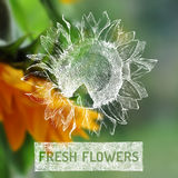 Fresh flowers poster Royalty Free Stock Photo