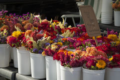Fresh flowers for sale at a Farmer's Market in Bloomington, Indiana. Royalty Free Stock Photo