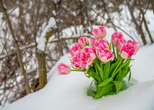 Fresh flowers in the snow Stock Photography