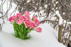 Fresh flowers in the snow Stock Photos
