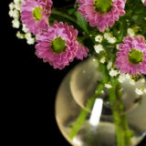 Fresh flowers in a vase Stock Photos