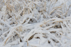 Fresh and fluffy snow on dry grass Royalty Free Stock Photos