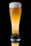 Fresh foamy beer Stock Image
