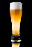 Fresh foamy beer Royalty Free Stock Photos