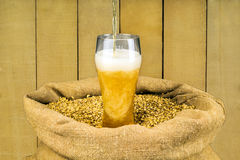 Fresh foamy beer Royalty Free Stock Photography