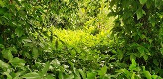 Fresh foliage, green leaves / follaje fresco, hojas verdes stock images