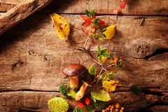 Fresh food from an autumn forest Royalty Free Stock Photography