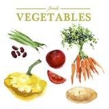 Fresh food illustration. Royalty Free Stock Photography