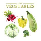 Fresh food illustration. Royalty Free Stock Photos