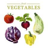 Fresh food illustration. Royalty Free Stock Images