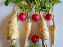 Fresh food parsley root with green leaves and red radish isolated. Fresh food parsley root with green leaves vegetables isolated picture red radish Stock Photos