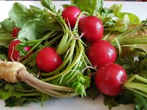 Fresh food parsley root with green leaves and red radish isolated. Fresh food parsley root with green leaves vegetables isolated picture red radish Stock Photo