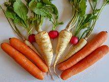 Fresh food parsley root with green leaves and red radish isolated. Fresh food parsley root with green leaves vegetables isolated picture red radish and carrots Royalty Free Stock Images