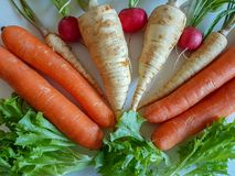 Fresh food parsley root with green leaves and red radish isolated. Fresh food parsley root with green leaves vegetables isolated picture red radish and carrots Royalty Free Stock Photography