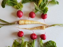 Fresh food parsley root with green leaves and red radish isolated. Fresh food parsley root with green leaves vegetables isolated picture red radish Royalty Free Stock Photography