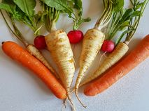Fresh food parsley root with green leaves and red radish. Fresh food parsley root with green leaves vegetables  picture red radish and carrots Stock Photography