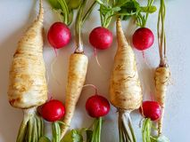 Fresh food parsley root with green leaves and red radish. Fresh food parsley root with green leaves vegetables  picture red radish Stock Photography