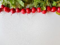 Fresh food red radish isolated on white background. Vegan vitamin Royalty Free Stock Image