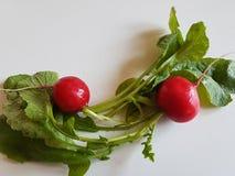 Fresh food red radish isolated on white background. Vegan vitamin Royalty Free Stock Images