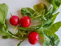 Fresh food red radish isolated on white background. Vegan vitamin Stock Photos