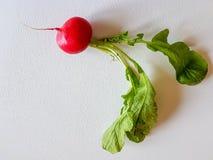 Fresh food red radish  on white background. Vegan vitamin Stock Image