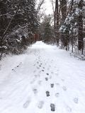 Footsteps in Snow on Wooded Path royalty free stock images