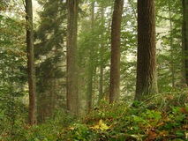 Fresh forest Stock Images