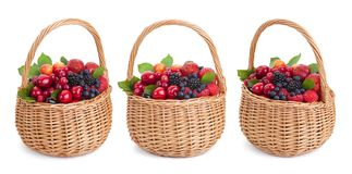 Fresh forest berries in basket isolated on white background with clipping path. Collection Stock Image