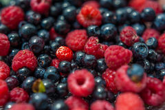 Fresh forest berries Royalty Free Stock Photo