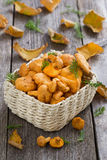Fresh forest chanterelle mushrooms in a basket Royalty Free Stock Images