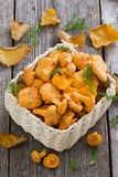 fresh forest chanterelle mushrooms in a basket, vertical Royalty Free Stock Photography