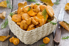 Fresh forest chanterelle mushrooms in a basket on wooden table Royalty Free Stock Photos