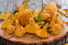 Fresh forest chanterelle on a wooden background Stock Images