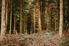 Fresh forest in early spring. Nature background Royalty Free Stock Photo