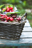 Fresh forest fruit on wood Stock Images