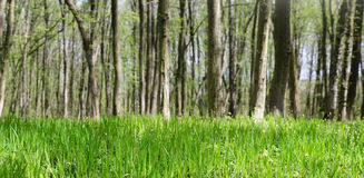 Fresh forest grass Royalty Free Stock Photos