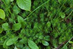 Fresh forest green garden, freshness herb background.  royalty free stock photography