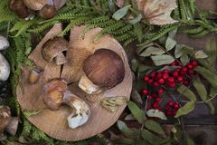 Fresh mushroom boletus. Fresh forest mushroom boletus on the background of autumn leaves Royalty Free Stock Photography
