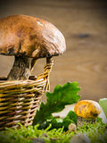 Fresh forest mushrooms Stock Images