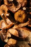 Fresh forest mushrooms background Stock Images
