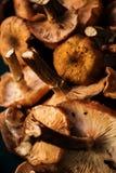 Fresh forest mushrooms background Stock Images