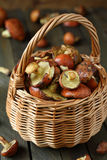Fresh forest mushrooms in a basket Royalty Free Stock Photo