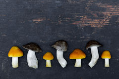 Fresh Forest Mushrooms In An Old Black Wooden Board Lined In A Row. Stock Photography