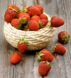 Fresh Forest Strawberries Royalty Free Stock Photos