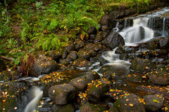 Fresh forest stream Royalty Free Stock Image